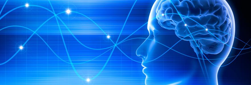 L'apport de la neurophysiologie